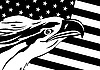 Vector clipart: Eagle and U S flag