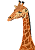 Векторный клипарт: Жираф