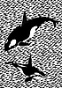 Vector clipart: Killer whales in the sea