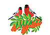 Vector clipart: Bullfinch on branch with sea buckthorn