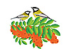 Vector clipart: Tits on branch with sea buckthorn