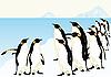 Vector clipart: Penguins
