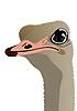 Vector clipart: The head of an ostrich