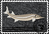 Vector clipart: Postage stamp Sturgeon and caviar