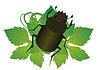 Vector clipart: Beetle