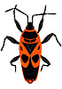 Vector clipart: Beetle The soldier