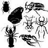 Vector clipart: Fauna