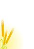 Векторный клипарт: Пшеница