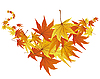 Vector clipart: autumn leaves