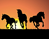 horses on sunset