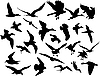 Vector clipart: flying birds