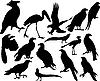 Vector clipart: birds