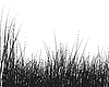 Vector clipart: grass silhouette