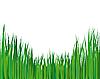 Vector clipart: summer landscape
