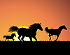 Vector clipart: horse on sunset background