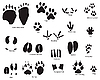 Vector clipart: animal tracks