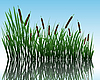 Grass on water | Stock Vector Graphics