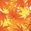 Vector clipart: twisted leaves