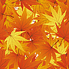 Vector clipart: seamless maple leaves