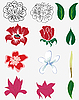 Vector clipart: flower set
