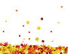 Vector clipart: maples leaves