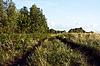 나무를 따라 시골 길. 러시아. 익과   Stock Foto