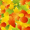 Векторный клипарт: кленов листьев бесшовные