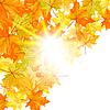 Vector clipart: Autumn maple