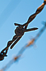 Barbed wire | Stock Foto