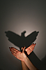 Photo 300 DPI: silhouette shadow of eagle