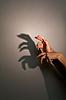蜥蜴的轮廓阴影 | 免版税照片