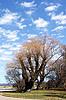 Spring landscape | Stock Foto