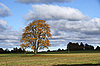 Landscape with tree | Stock Foto