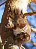 ID 3134038 | Squirrel | High resolution stock photo | CLIPARTO