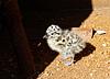 Nestling of seagull | Stock Foto