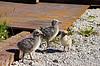Three nestlings | Stock Foto
