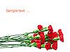 Carnations | Stock Foto