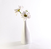 Kwiaty w wazonie | Stock Foto