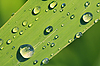 ID 3088444 | Leaf with water drops | High resolution stock photo | CLIPARTO