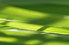 ID 3088447 | Green grass | High resolution stock photo | CLIPARTO