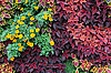 Colorful plants | Stock Foto
