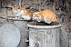 Two Stray Cats on Garbage Bins | Stock Foto