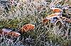 녹색 눈 잔디에 낙엽 | Stock Foto
