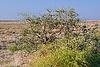 ID 3108722 | Strauch Vegetation in Prairie | Foto mit hoher Auflösung | CLIPARTO