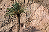 ID 3118425 | Lone Palm Tree in Israel | High resolution stock photo | CLIPARTO