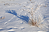 ID 3125493 | Shrub in the Field Covered with Snow | 높은 해상도 사진 | CLIPARTO
