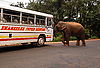 Wild Elephants Attacks Passenger Bus | Stock Foto