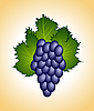 Vector clipart: clous-up purple grape