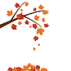 Vector clipart: Branch of maple tree