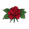 Vector clipart: beautiful red rose